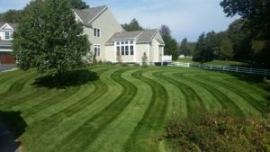 grass with mower lines