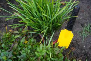 shovel in the soil